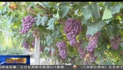 第七屆中國·敦煌葡萄文化旅遊節開幕