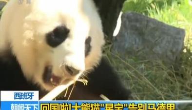 """西班牙:回國啦!大熊貓""""星寶""""告別馬德裏"""