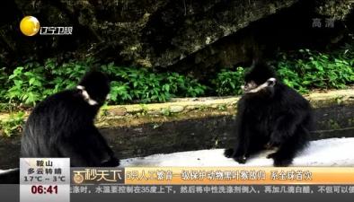 5只人工繁育一級保護動物黑葉猴放歸 係全球首次