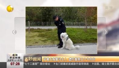 薩摩犬報警尋主人 蹭吃警察五個牛肉包
