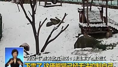 降溫來了黑龍江下雪了 這倆熊貓已經無法控制自己