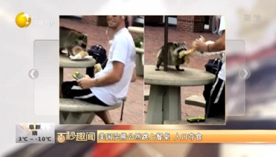 美國浣熊公然跳上餐桌 人口奪食