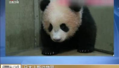 """日本上野動物園:出生100多天 """"香香""""萌萌噠"""