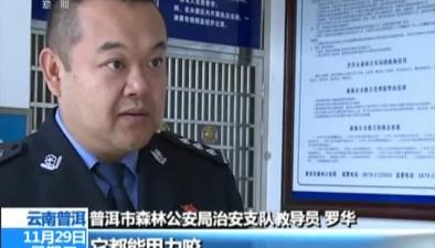 雲南普洱:鼯鼠闖入民宅 居民報警求助