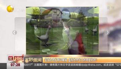 美國為雞發明VR眼鏡 虛擬世界長大的雞更好吃?