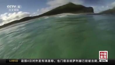 衝浪者偶遇大鯊魚 迅速逃生