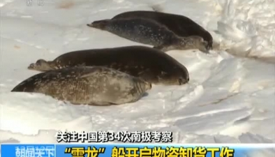 """關注中國第34次南極考察:""""雪龍""""船開啟物資卸貨工作"""
