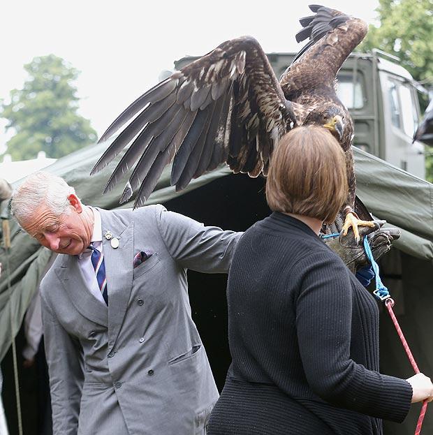 的一个中心 64岁的查尔斯王子和这只名叫西风的秃鹰显示相互对视...