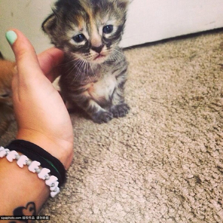 英国一表情最a表情小猫网络爆红被送红包无比v表情群图绰号表情包图片
