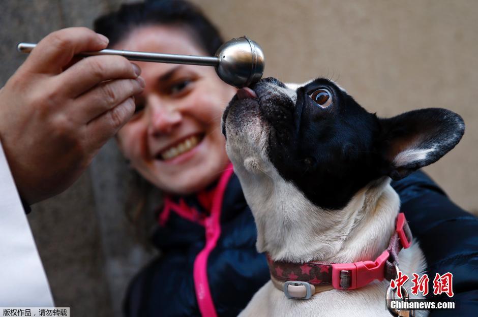 西班牙举行动物祈福仪式