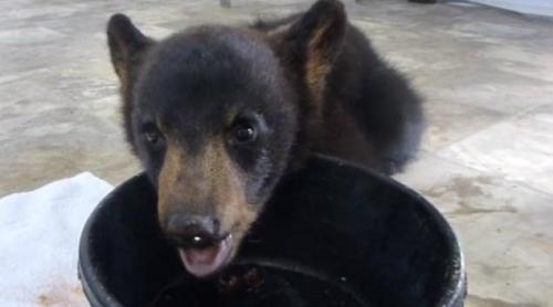 """小黑熊被同伴遗弃成孤儿急找游客""""当妈""""求救"""