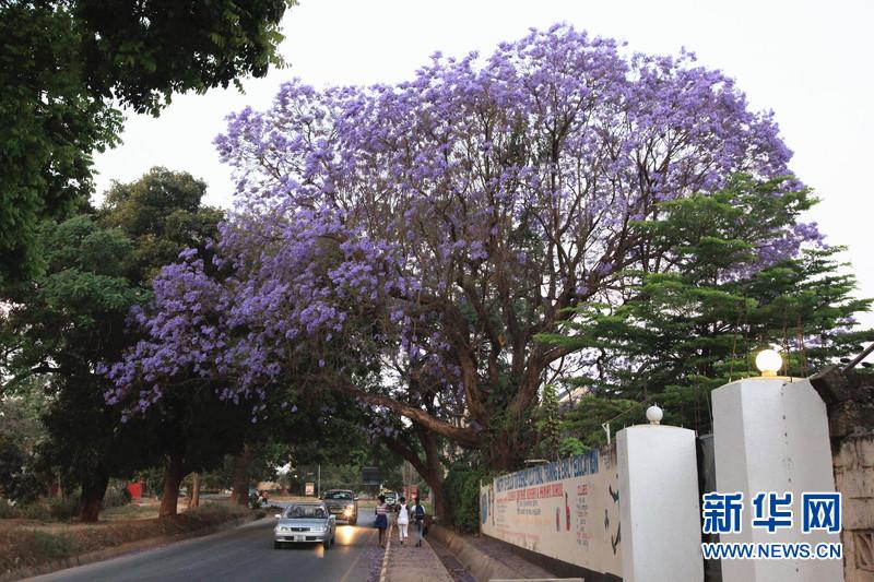 赞比亚首都街景_赞比亚的首都