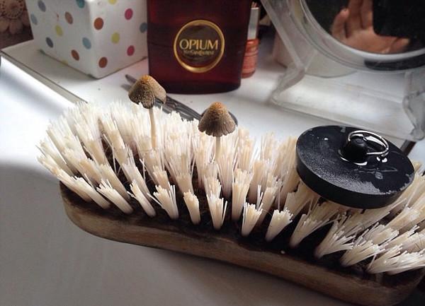 毛刷上长出两朵锥型头的蘑菇(网页截图)
