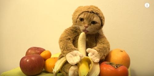 猫咪卖力扮小猴迎接猴年吃香蕉卖萌超可爱(图)