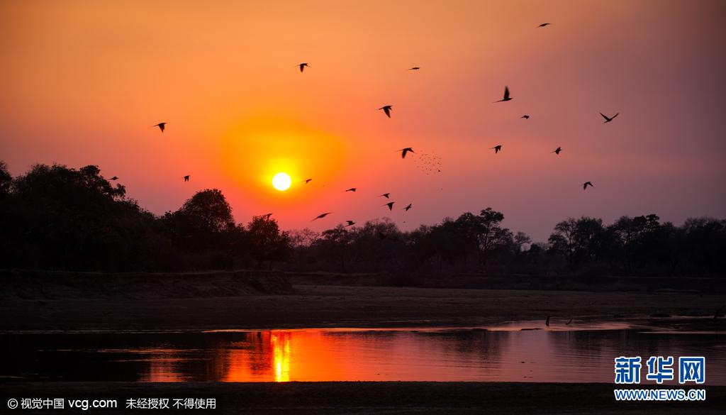 赞比亚数千红喉蜂虎涌向繁殖地 色彩艳丽动人