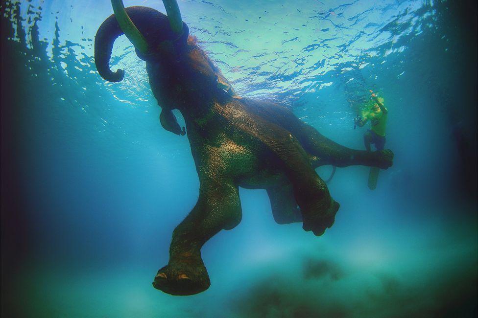 迪拜摄影师拍精彩纷呈海底世界 大象水中游