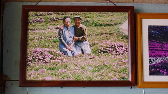 日本老翁栽种花海 用弥漫花香抚慰失明妻子