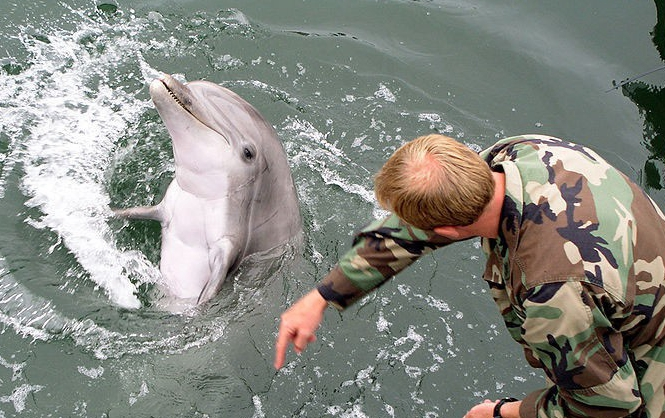 """俄军计划重征""""海豚兵""""部署克里米亚军港"""