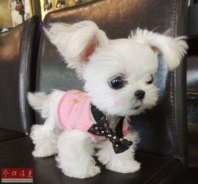 Dog Clothes Uk Sale