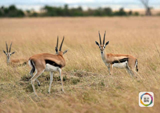 与非洲动物赛跑是一种怎样的体验?-新华网