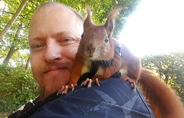 有爱!丹麦男子与被遗弃松鼠情同父子