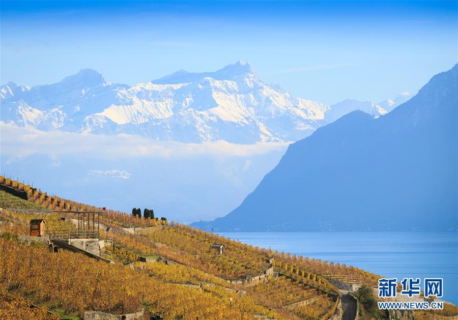 (国际)(1)瑞士:深秋的拉沃葡萄园