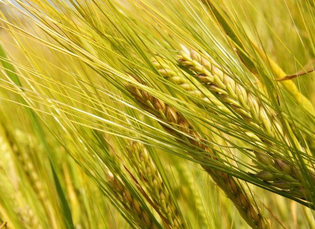 消除饥饿 高清卫星图像有望助力粮食增产