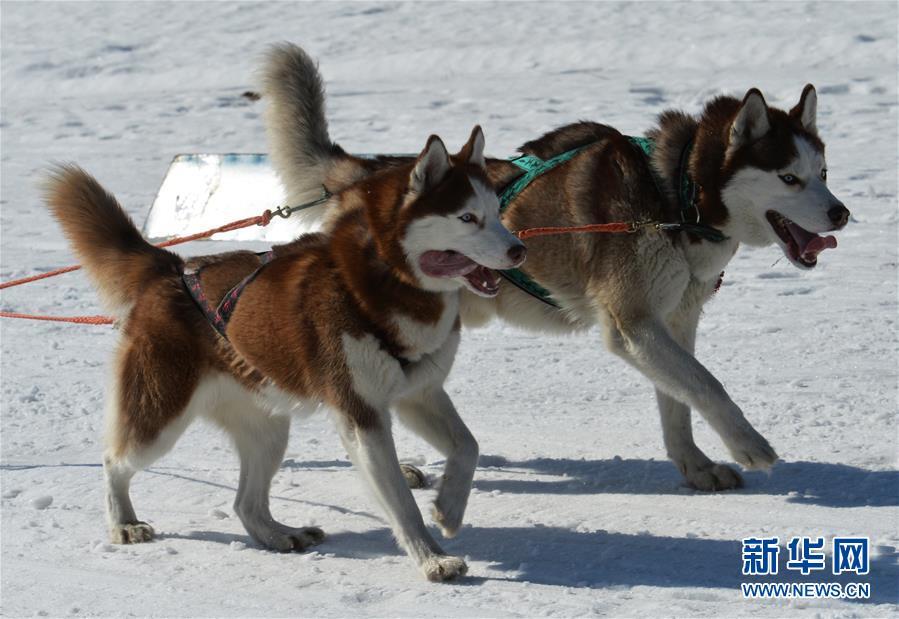 [5](外代二线)俄罗斯滨海边疆区举行狗拉雪橇比赛