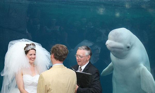 """可爱!美白鲸水族馆婚礼现场""""凑热闹""""抢镜新婚夫妇(组图)"""