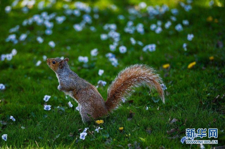 华盛顿今年春天来得早 气温升高或不利健康