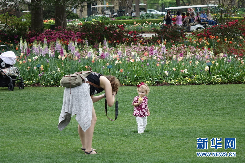 美国西南部地区最大的春季花卉展在达拉斯举行