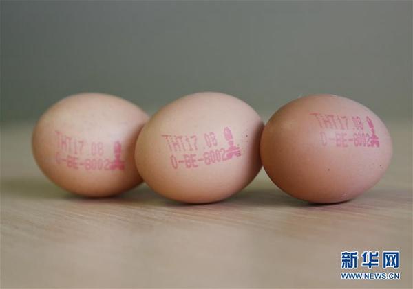 """""""毒鸡蛋""""事件蔓延欧洲16国 欧盟急挠头"""