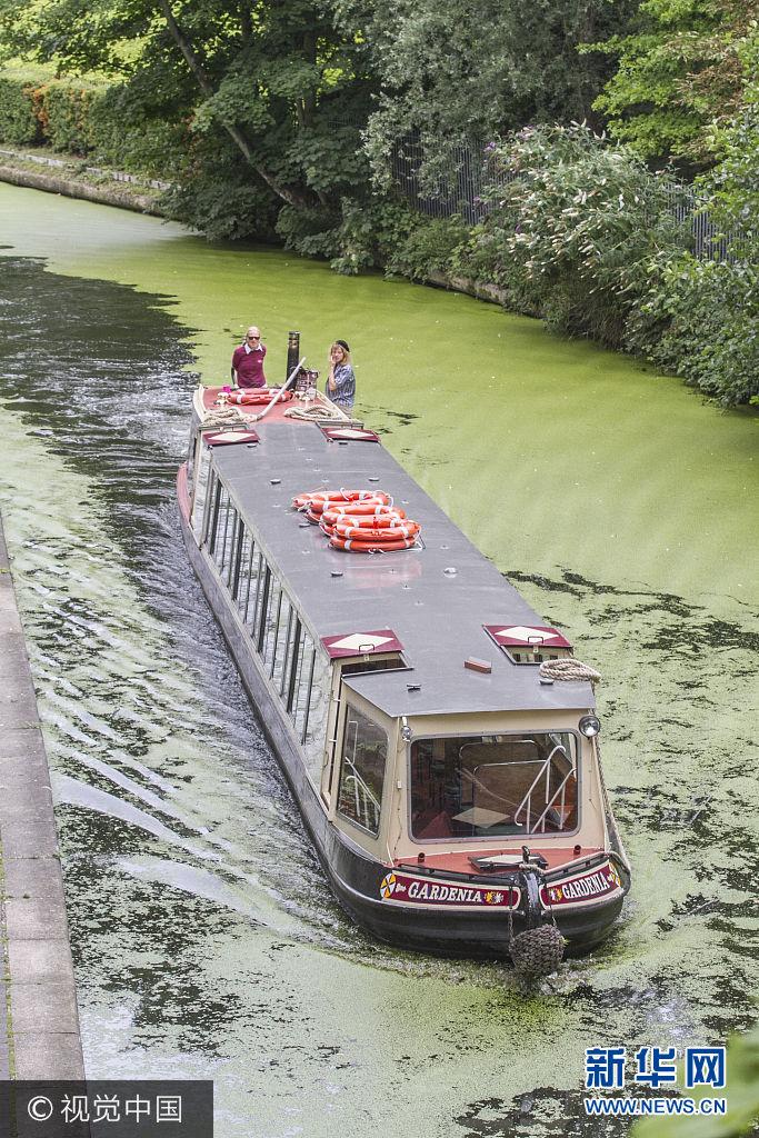 高温致伦敦运河 蓝藻 肆虐 水生环境遭严重破坏 新华网