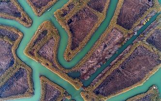 航拍冬日洪澤湖濕地