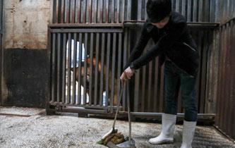 武漢市民變身飼養員 為北極熊打掃房間