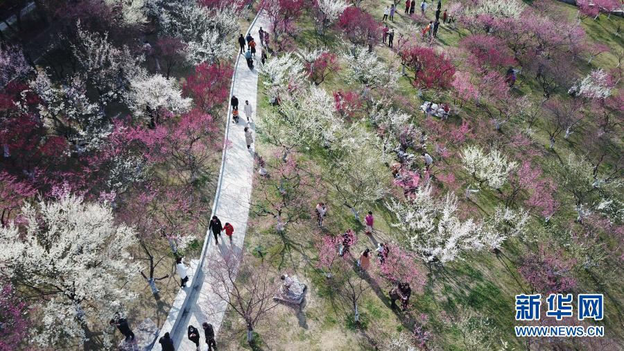 安徽合肥:梅花开 春意浓