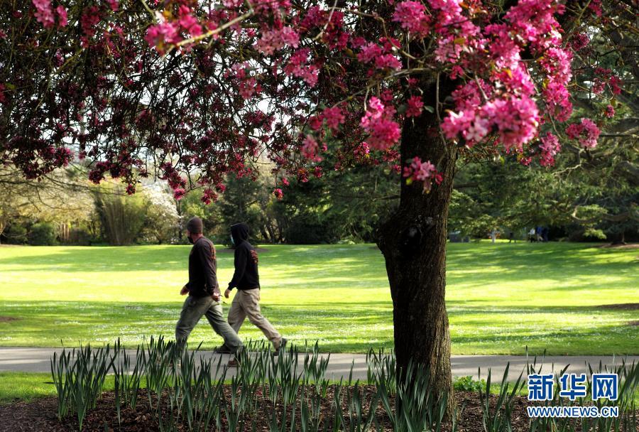 美国旧金山:满园春色关不住