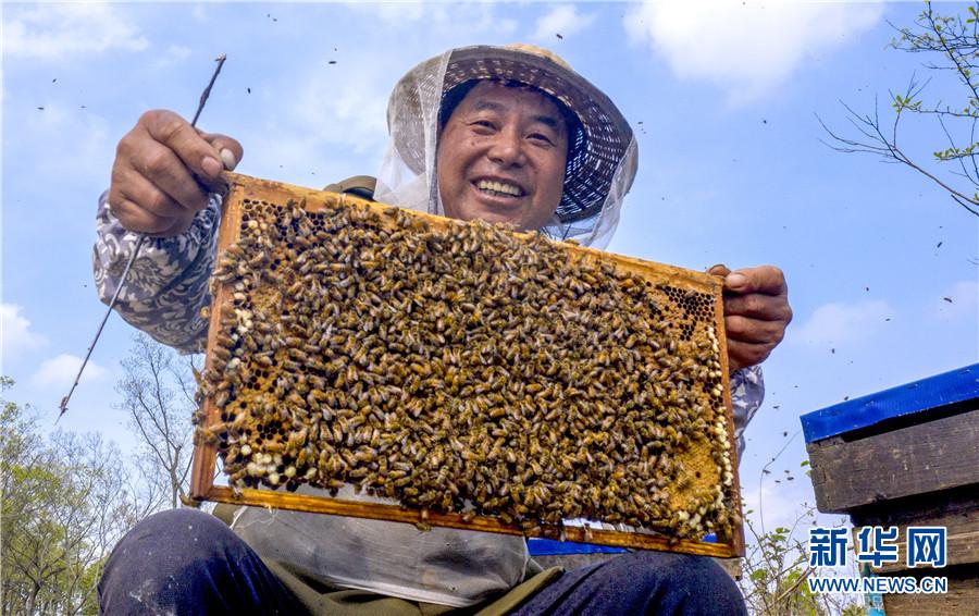 春暖花开 蜂农酝酿甜蜜事业忙