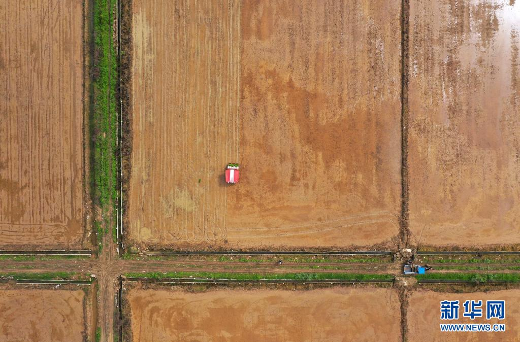 江西南昌:天气转暖 农户插秧忙