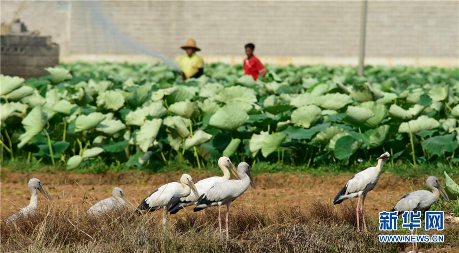 领略生物多样性之美|云南弥勒:人鸟和谐共家园
