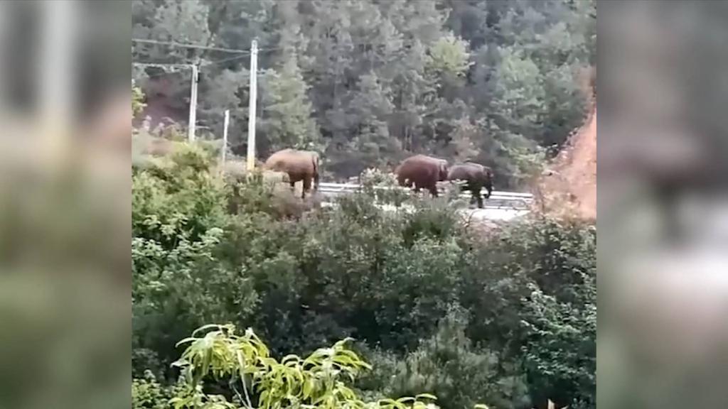 云南北迁亚洲象群进入昆明市辖区