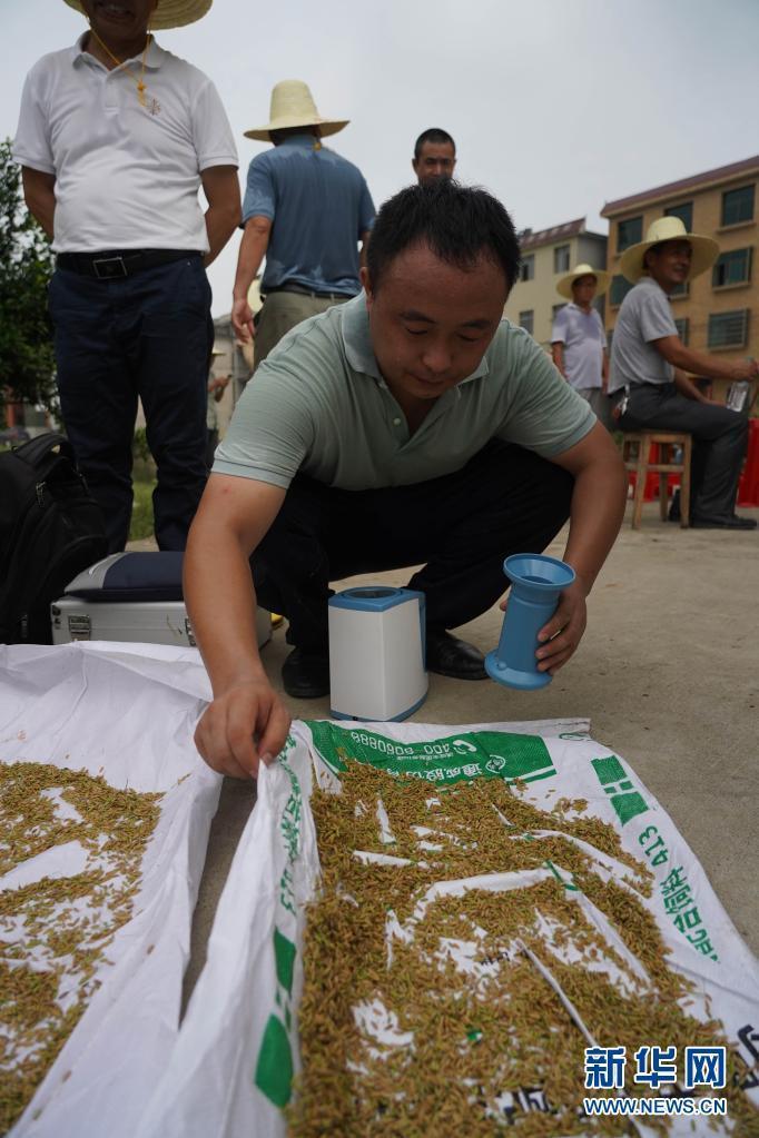 喜讯!我国早粳稻新品种选育成功 有望提前一个季度吃上新粳米