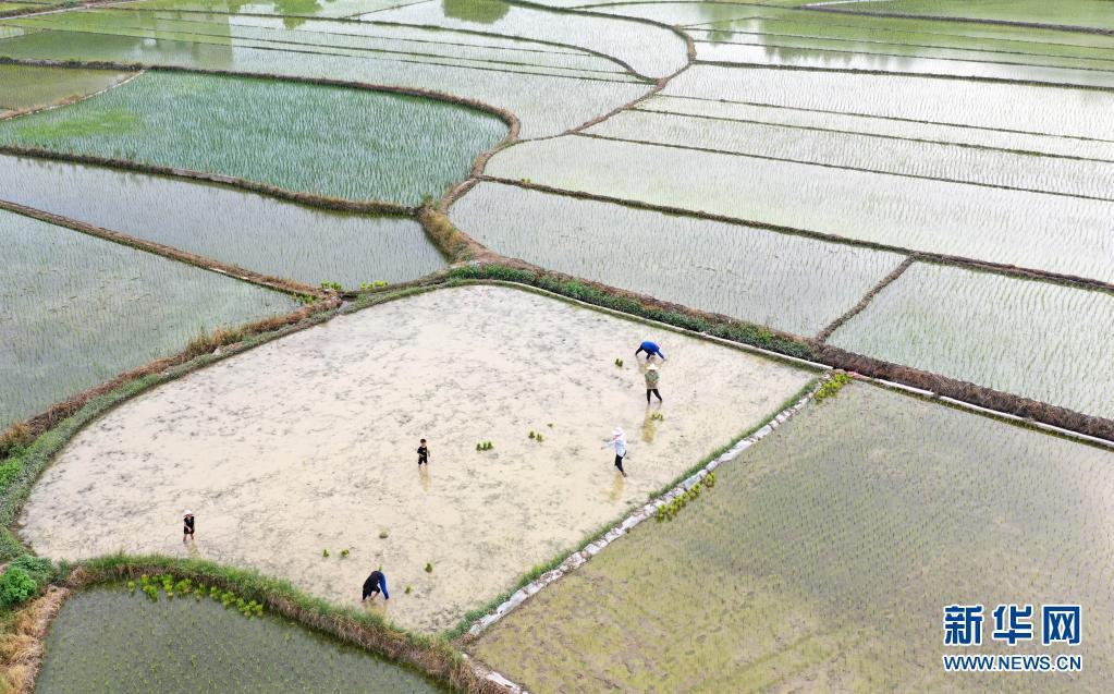 走进稻田 感受农忙
