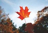 加拿大名校陸續開放明年秋季入學申請 多所熱門大學申請難度大增