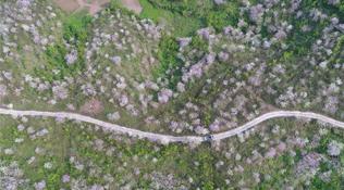 广西蒲庙:花开引客来