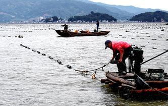 福建霞浦:漁民海上忙冬播
