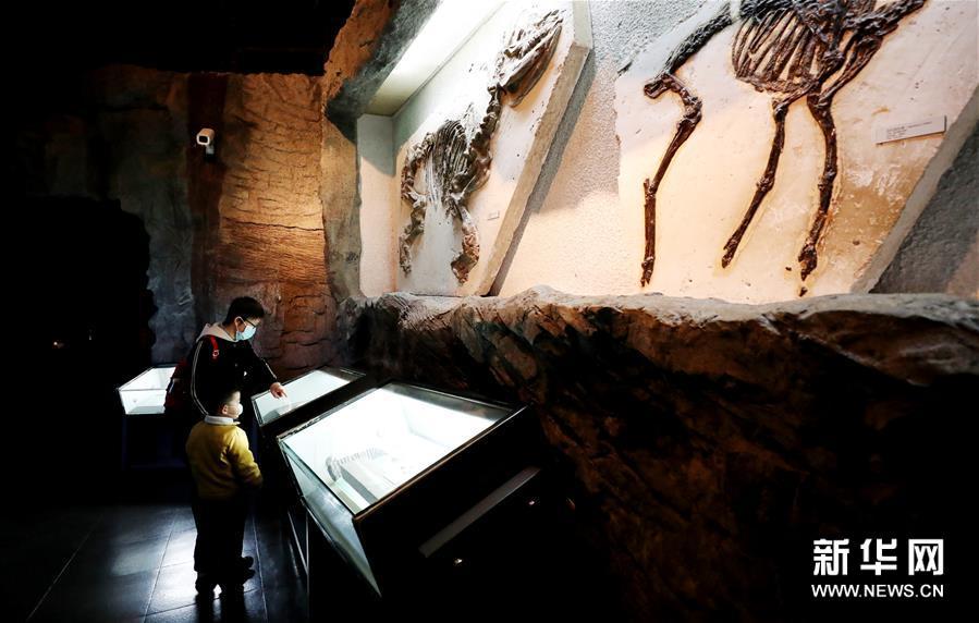 (文化)(1)上海科技館和自然博物館恢復開放