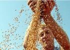 俄羅斯2017年糧食産量有望創歷史新高