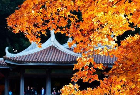 萬紫千紅總是情 東京新宿的紅葉物語