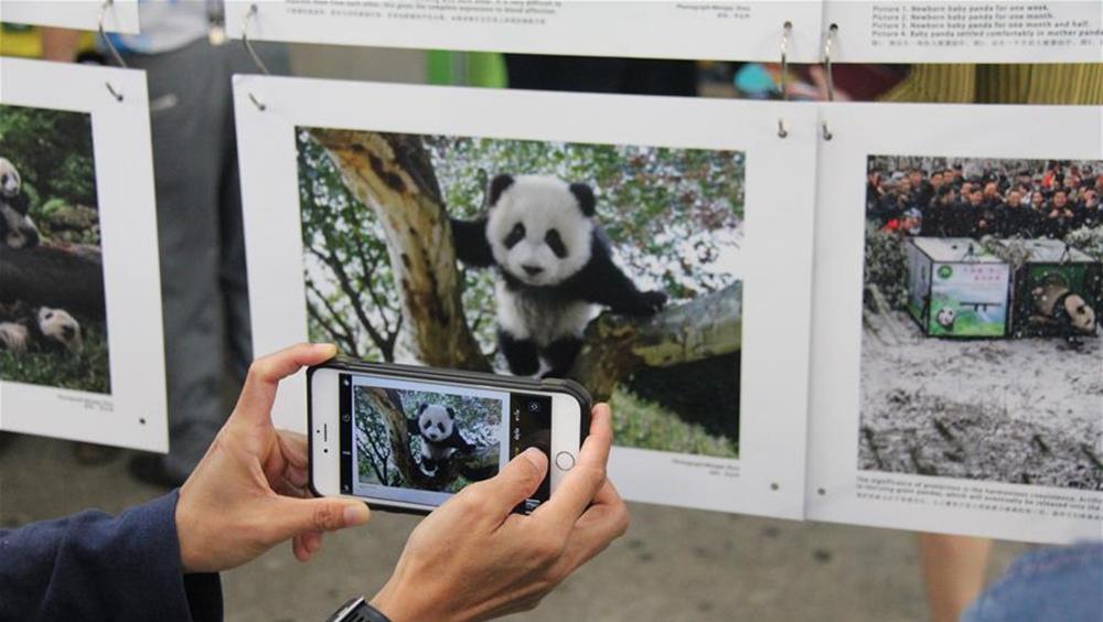 中國攝影師在泰國舉辦大熊貓攝影展